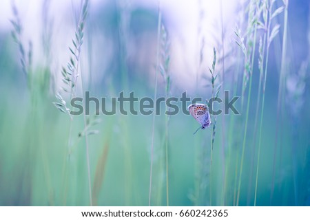 Beautiful butterfly nature background.  Inspirational nature closeup meadow.