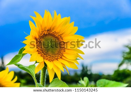 Beautiful butterfly on a bright sunflower against a background of blurry sky