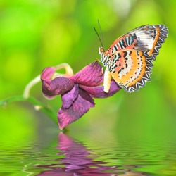 Beautiful butterfly on orchid flower, nice summer background