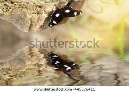 beautiful butterfly on rock.