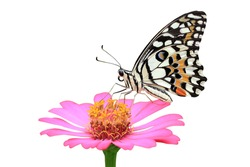 beautiful butterfly on the flower isolated on white background