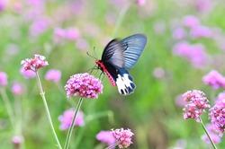 Beautiful  butterfly  perching on  flower