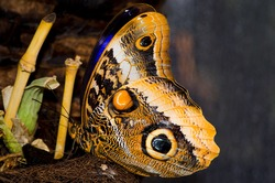 beautiful butterfly sits with folded wings