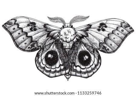 Beautiful Butterfly tattoo. Antherina suraka. Madagascar bullseye. Traditional black dot style ink. Mystical symbol of freedom, nature, beauty, perfection. Graphic arts. ストックフォト ©
