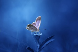 Beautiful butterfly with blue background