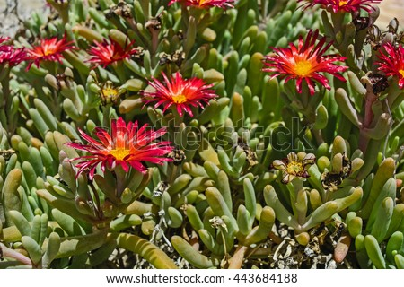 beautiful cactus plant of the...