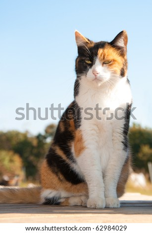 Beautiful calico cat sitting on porch with a background of trees and blue sky