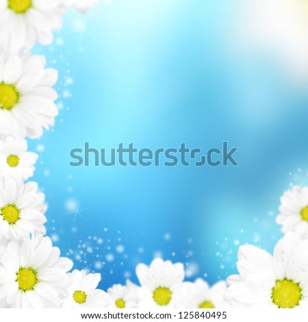 beautiful camomile floral frame on a blue background - stock photo