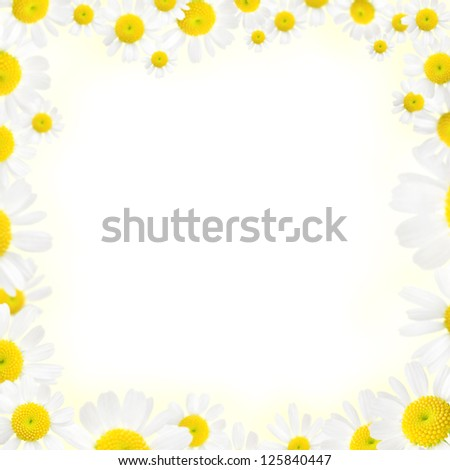 beautiful camomile floral frame on a white background