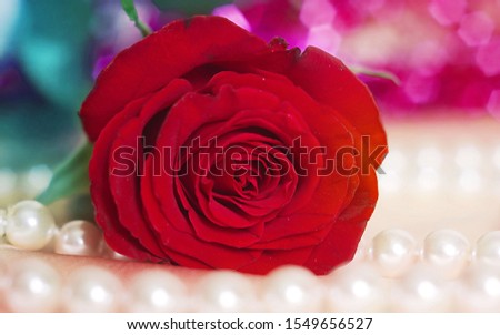 beautiful card with red rose and pink pearls #1549656527