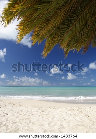Beautiful caribbean beach with a palm leaf