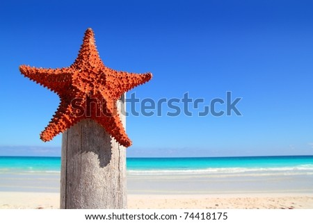 beautiful caribbean starfish on wood pole beach