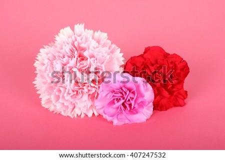 Beautiful carnations #407247532