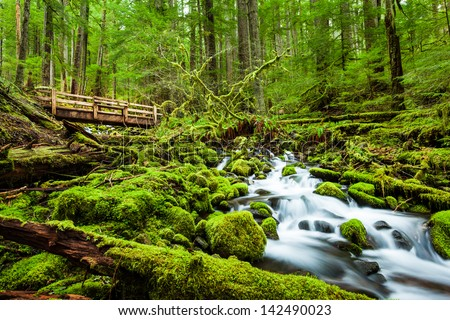 Beautiful cascade waterfall in Sol Duc falls trail, Olympic national park, WA, US