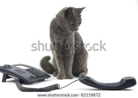 Beautiful cat and phone isolated over white background