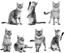 Beautiful cat collection isolated on white
