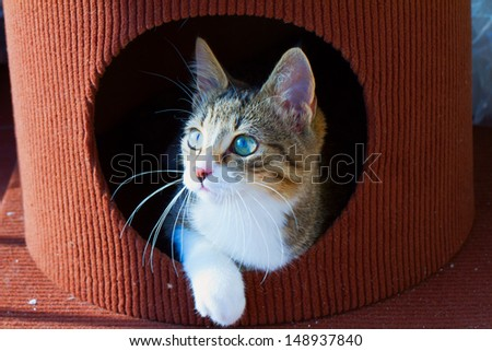Beautiful cat coming out of a hole #148937840