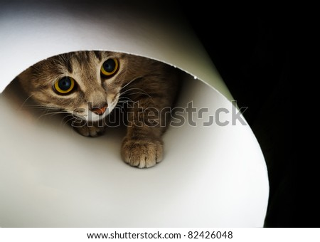 Beautiful cat curiously looking up on a black background