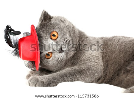 beautiful cat in a cap on a light background