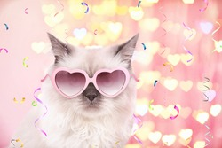 Beautiful cat in pink heart-shaped sunglasses on festive background