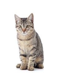 Beautiful cat isolated on white background.