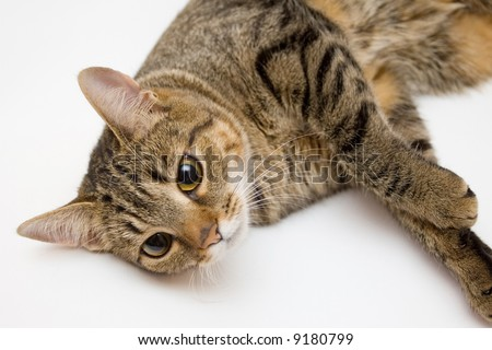 Beautiful cat on a white background