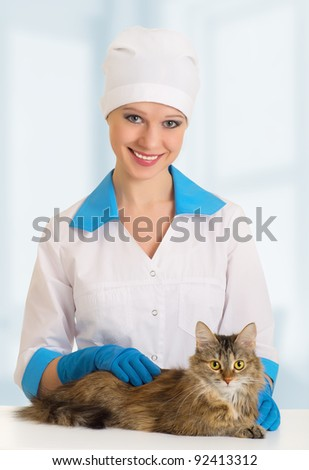 beautiful cat on examination by a veterinarian - stock photo