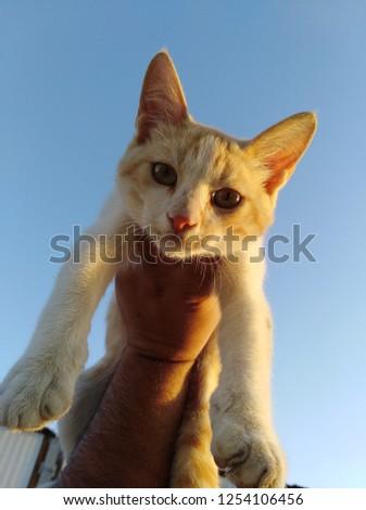Beautiful Cat on Hand