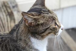 Beautiful cat outside upclose photo
