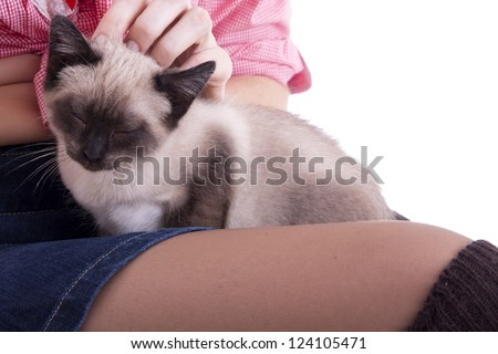Beautiful Cat Relaxing on Owners Lap and Hands