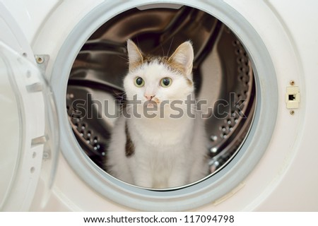 Beautiful cat sitting in the washing machine
