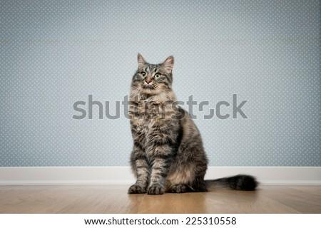 Beautiful cat sitting on hardwood floor against vintage dotted wallpaper.