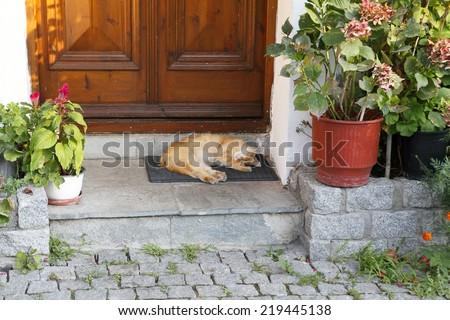 Beautiful cat sleeping in front of the door