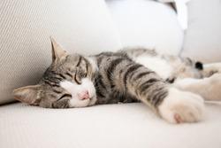 Beautiful cat sleeping on a white sofa