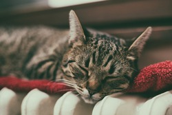Beautiful cat sleeping on radiator by the window.Image is intentionally toned.