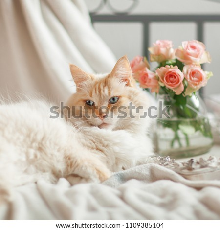 beautiful cat with blue eyes lies on the bed and relaxes #1109385104