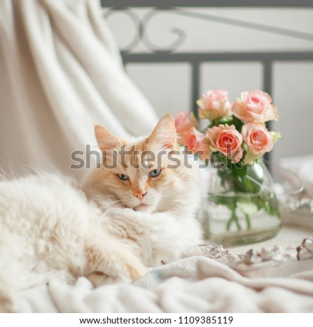 beautiful cat with blue eyes lies on the bed and relaxes #1109385119