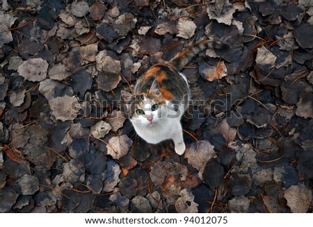 Beautiful cat with same colors as the leaves in the background