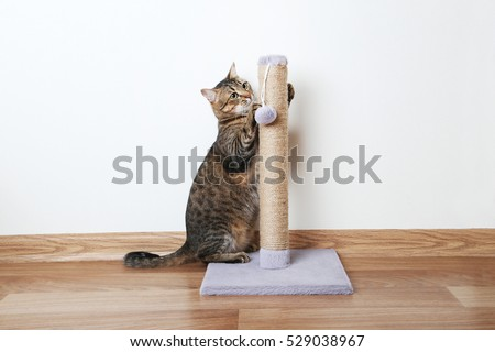 Beautiful cat with the scratching post #529038967