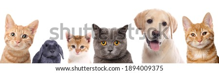 Beautiful cats, dogs and a rabbit in front of a white background