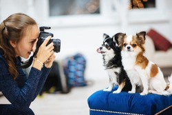 beautiful caucasian girl photographer with camera taking picture of little dogs in studio