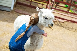 Beautiful caucasian toddler girl holding and embrace white furry alpaca lama camel