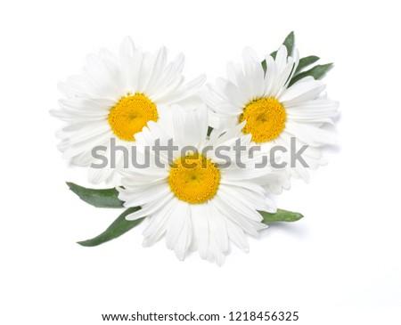 Beautiful chamomile flowers on white background #1218456325