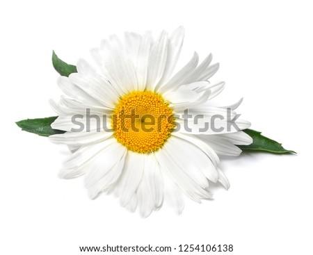 Beautiful chamomile flowers on white background #1254106138
