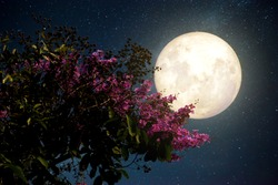 Beautiful cherry blossom (sakura flowers) with Milky Way star in night skies; full moon - Retro style artwork with vintage color tone(Elements of this moon image furnished by NASA)