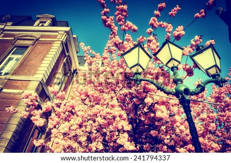Beautiful cherry tree blossom on blue sky background