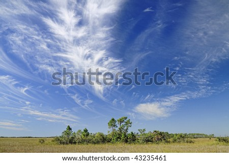 Beautiful cirrus cloud formation over the Florida Everglades with a bayhead hammock or tree island in the foreground.
