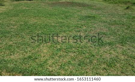 beautiful clean grass green background