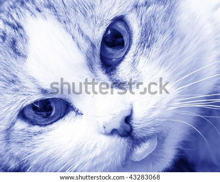 beautiful close up cat's face