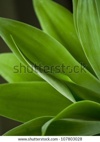 Beautiful close up shot of a fresh green agave plant